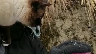 thirsty cat drinking water, funny