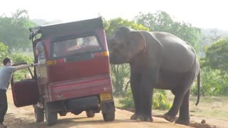 Sri Lanka - Yala National Park - Elephant  - Video