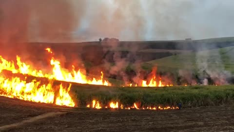 Massive sugar cane fire