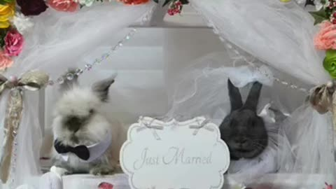 Story of two bunnies getting married