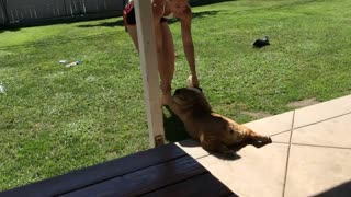 Funny moments of your pets that you can be die of laughing - Video