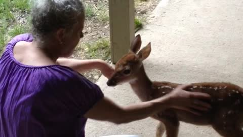 Woman Befriends Sweet Abandoned Fawn