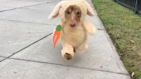 Puppy dresses as cute bunny rabbit for Halloween