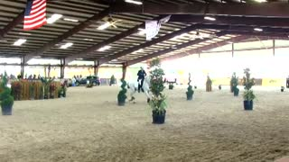 Working Equitation- New Term For Fun - Video
