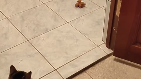 The puppy cannot leave the bathroom while the kitten is nearby