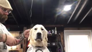 Barber gives dog his first ever haircut