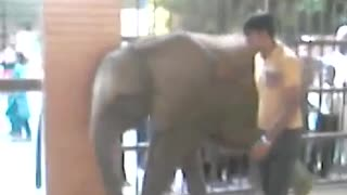 People gathering for an elephant. Its the exhibition of a beautiful elephant