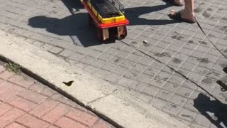 Little Dogs Pulling Little Wagons - Video