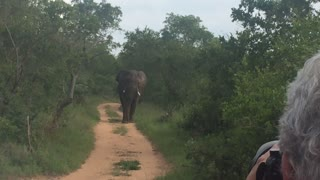 Bull Elephant chases safari tourists - Video