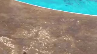 Teen Girl Gets ROCKED When Pool Jump Fails Spectacularly - Video