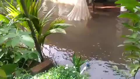Man catches fishes outside his flooded home.