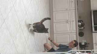 Grey cat playing with toy in kitchen