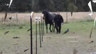 Equine Agility - Video