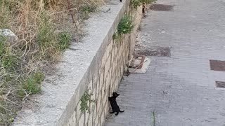 Mama Cat and Kitten Find Each Other