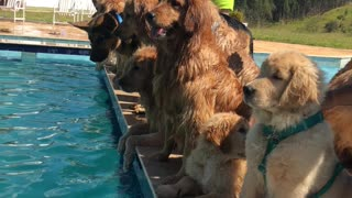 Dogs Choose Pool Party over Photoshoot