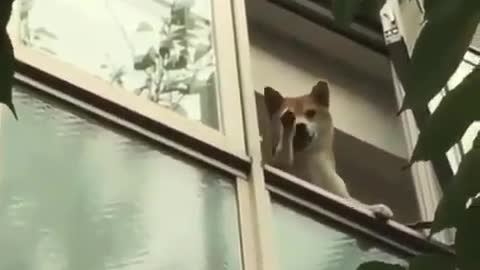 my dog waving to me from the window