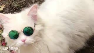 Cute Cat Wears Great Glasses