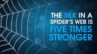 Spiders Are Awesome - Video