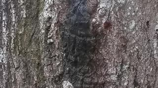 Snakes in thee tree must see😱