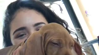 Girl scratching brown dogs ear zoom in - Video
