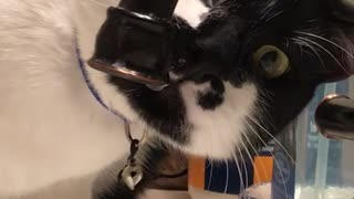 Black and white cat licking water out of black faucet - Video