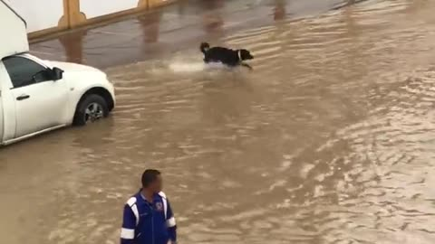 Dog Makes the Most out of Flooded Street
