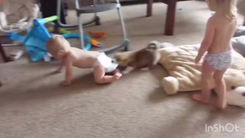 Corgi catches household to play together