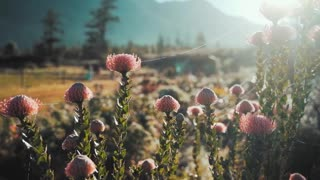 Free Flower Stock Video Footage