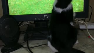 Adorable Female Cat Reactions To Liverpool Matches On Tv