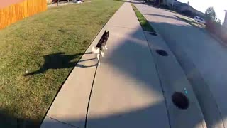 Guy uses longboard to walk his husky