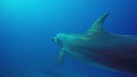 dolphins in the Red Sea eilat israel - photographed by Meni Meller