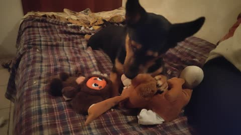 Puppy plays with a hare