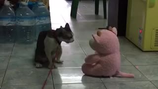 Cat Swats at New Toy