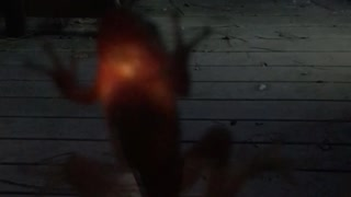 Frog Lights up After Firefly Meal - Video