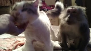 Cat and Monkey Love To Be Pet - Video