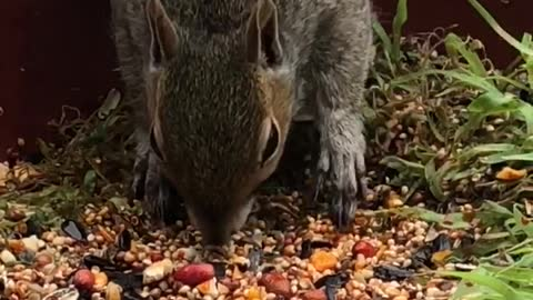Woman Sprays Flaming Hot Red Sauce On Bird Seed