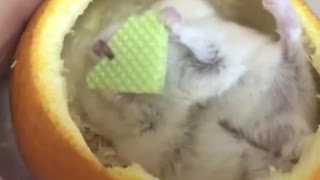 Mouse and Orange - Video