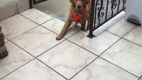 """*Knock Knock* Dog asks """"can i come in?"""""""
