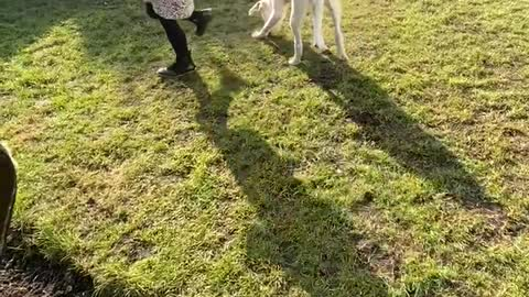 Girl teaching her new puppy some tricks