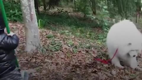 Dog Teaches His Little Boy About The World