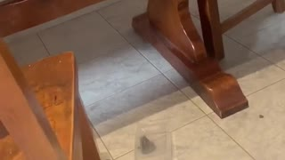 Trapped Frog Takes Container Away