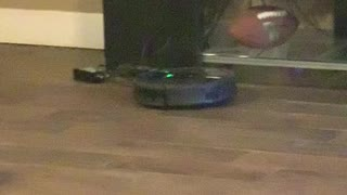 Smart Dog Turns off Roomba