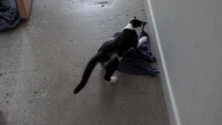 Cat Steals Shirt  - Video