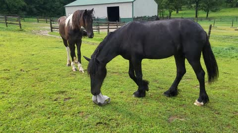 Funny horse tries to scare other horses with fly mask