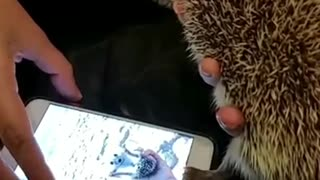 Hedgehog Unlocks Phone