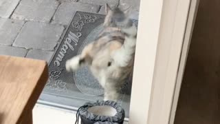 Kitty Has Special Way of Alerting Owner She Wants Inside