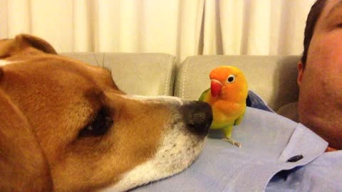 Curious dog sniffs out parrot friend