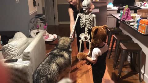 Good Doggy Obeys Halloween Skeleton's Commands