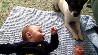 Cute Cats and Dogs Love Babies - Video