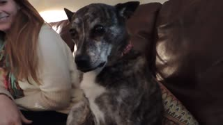 Elderly pup lets owner know exactly what she wants - Video